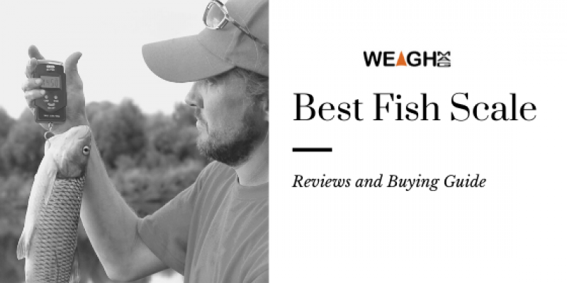 Best Fish Scale Reviews in 2020